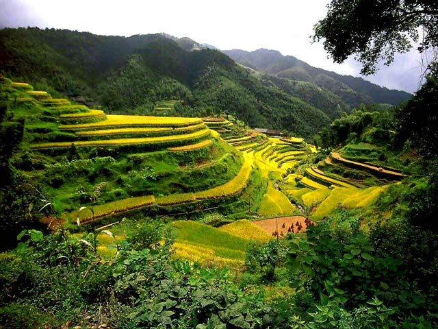 China Rice Terrace